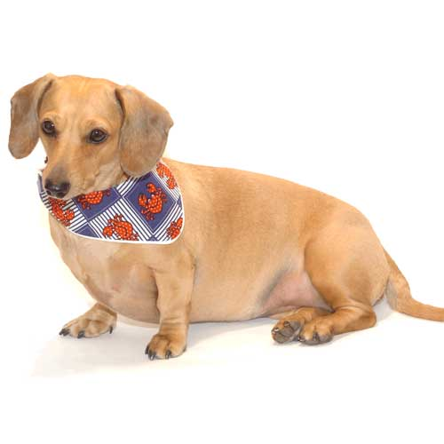 how to put a bandana on your dog