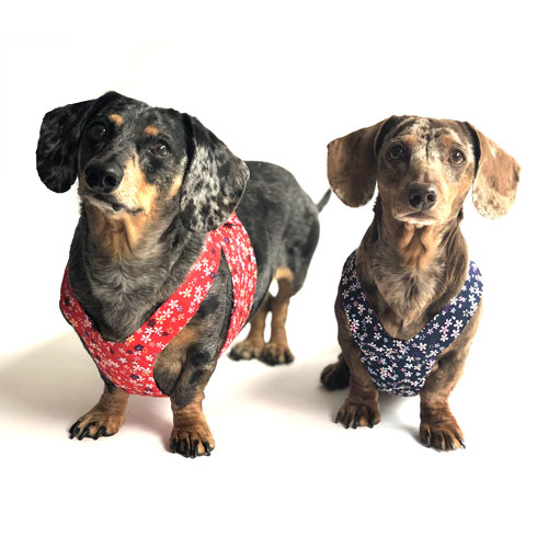 Reversible Dainty Petals Easy-Go Never-Choke Dachshund Harness